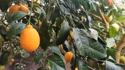 фото_ лимоны на джип-фото-сафари с planB.ua