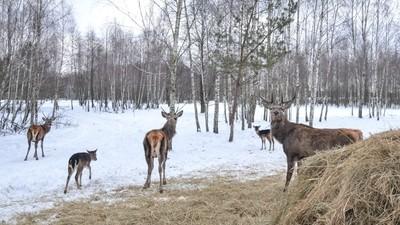 фото_ олени на джип-фото-сафари с planB.ua