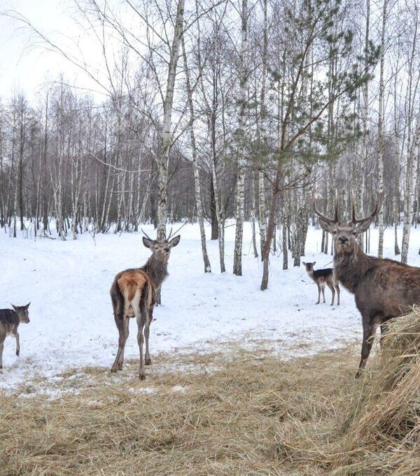 фото_ олени вблизи с planB.ua